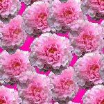 http://dl4.glitter-graphics.net/pub/1036/1036054escjpjk4az.jpg