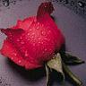 voteazaFLORIN-lilique - Pagina 4 311734wce5yokyx6